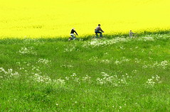 My green-yellow dream! (Gerlinde Hofmann) Tags: germany thuringia village bürden meadow canola rapeseed people three bike bicycle wildflower whiteflower