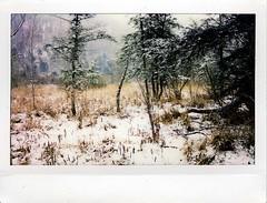 (babireley) Tags: instaxwide300 fujifilminstaxwide pawilds pottercounty pa pottercountypa winter snow