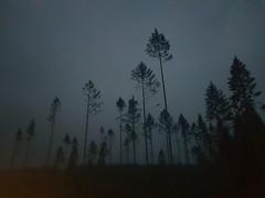 morning rain (anjamation) Tags: enchantedforest 2019 february rain unaltered samsunggalaxys8 smg950f trees trunk earlymorning