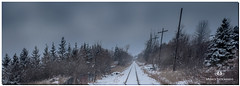 MARCH 2019 NGM_0449_7055-1-222 (Nick and Karen Munroe) Tags: train traintracks cnr snow snowfall snowstorm snowy wintry winter winterwonderland clouds cloudy cloudcover darksky karenick23 karenick karenandnickmunroe karenandnick munroe karenmunroe karen nickandkaren nickandkarenmunroe nick nickmunroe munroenick munroedesigns photography munroephotoghrpahy munroedesignsphotography nature landscape brampton bramptonontario ontario ontariocanada outdoors canada d750 nikond750 nikon nikon1424f28 1424 1424f28 nikon1424 nikonf28 f28 wideangle wideanglelens colour colours color colors