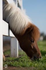 #horses #horse #horsesofinstagram #equestrian #horseriding #equine #pony #love #instahorse #dressage #horsephotography #pferd #horselove #nature #instagram #horselover #photography #equestrianlife #showjumping #riding #pferde #horsebackriding #animals #ar (Ahmad Alirhayim) Tags: love equestrianlife equestrian ponies riding instagram showjumping pferde instahorse animals horsephotography instagood art bhfyp nature like horseriding horse dressage horselover horsesofinstagram horselove pferd dog pony photography horsebackriding horses equine