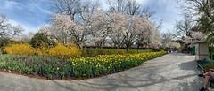 Botanical garden (pianoforte) Tags: dallas arboretum dallastx dallasarboretumandbotanicalgarden flowers dallasblooms spring 2019 spring2019