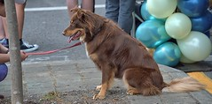 Man's Best Friend (Scott 97006) Tags: dog canine animal pet cute obedient alert seated