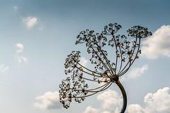 Speedway Tree Art (Bracus Triticum) Tags: speedway tree art indianapolis インディアナポリス indiana インディアナ州 unitedstates usa アメリカ合衆国 アメリカ 8月 八月 葉月 hachigatsu hazuki leafmonth 2018 平成30年 summer august