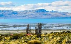 "Lago Argentino-0403 (kasiahalka) Tags: argentina argentinalake glacier hotel ice icefield iceberg kostenaikehotel lagoargentino lake losglaciaresnationalpark miradordelossuspiros nationalpark np patagonia patagoniadesert patagoniasteppe southamerica town water ""santa cruz province"" unesco worldheritagesite"