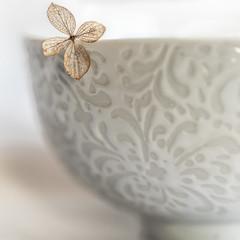 WHITE ON WHITE, Macro Monday Jan, 7th (shreya59) Tags: macromondays whiteonwhite bowl white flowers hydrangea stilllife texture pottery