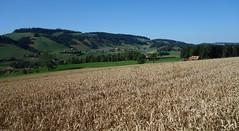 DSC05644 (ursrüegsegger) Tags: linden juli august getreideernte bauernhöfe landschaft regenbogen