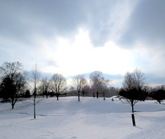 IMG_4565 (kennethkonica) Tags: canonpowershot canon usa america midwest indianapolis indiana indy color outdoor wildlife winter trees snow park landscape