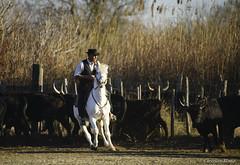 _DSC0636 (chris30300) Tags: camargue cheval