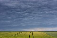 Rural Composition (Rita Eberle-Wessner) Tags: landschaft landscape acre acker feld felder getreide corn gerste barley landwirtschaft agriculture minimalism minimalismus himmel sky clouds wolken trakturspur traces