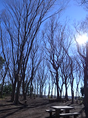 19o3069 (kimagurenote) Tags: tree sky 東高根森林公園 higashitakane forest park 川崎市宮前区 miyamaekawasaki