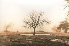 455 - Wet Pasture (Brad Renken) Tags: blackandwhite pentax k1000 smc 1450 hp5 caffenol semi stand lith foma warmtone 332 rc arista pasture nebraska nebr neb ne gosper fog winter 35mm cl film