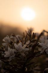 (matthiasolschewski) Tags: goldenestunde nikkorais10525 frühjahr