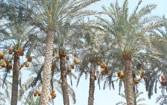 Palm Biomass to Furfural