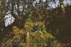 02 Escondido_Vijanera 19-    -Ana Sanchez (Asociación Cultural Amigos de la Vijanera) Tags: 2019 anasviaje cantabria lavijanera silio vijanera2019 carnavaldeinvierno invierno