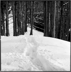 Spuren im Schnee_Hasselblad (ksadjina) Tags: 10min 6x6 adoxaph09 austria carlzeisssonnar150mmf14 hasselblad500cm kodak400tmax nikonsupercoolscan9000ed nockstein salzburg silverfast analog blackwhite film scan winter