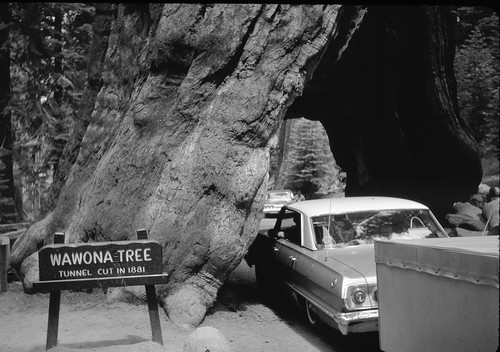 Family car and home-made camping trailer, Yosemite NP 1964