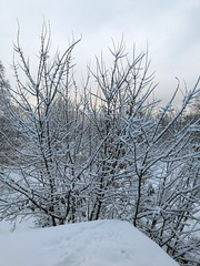 (gabre97) Tags: white nature beautiful snow day winter sky light pink tree branch