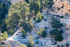 20180607 Grand Canyon National Park (53).jpg (spierson82) Tags: southrim summer grandcanyon canyon nationalpark grandcanyonnationalpark arizona vacation animal grandcanyonvillage unitedstates us