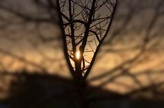 Cucù🌞 (salernolorenza) Tags: nikon albero alba tree sun sunrise