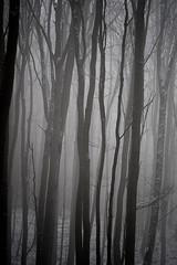 20190202-057 (sulamith.sallmann) Tags: landschaft pflanzen wetter baum botanik brandenburg buche buchenwaldgrumsin bäume deutschland europa laubbaum natur nebel nebelig pflanze schnee snow uckermark wald weltnaturerbe winter winterlich sulamithsallmann