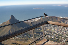 Cape town ,seen from Tafelberg free as a bird (Only photoshoot, don't be afraid) Tags: zuidafrika southafrica sea tafelberg capetown kaapstad sky mountain nikon nikkor bird blue