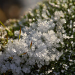 Stacked Ice on Moss thumbnail
