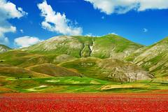 Poppy Sea, Castelluccio, Central Italy (Claudio_R_1973) Tags: poppy poppies flower red grassland montidellalaga castelluccio centralitaly apennines colorful vivid nature wilderness umbria
