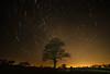 Night Trails (Rob Pitt) Tags: wirral startrail samyang 14mm f28 sony a7rii urban trees night sky long exposure cheshire tree