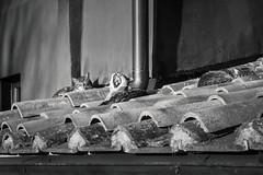 pennichella di gruppo (Laura Sergiampietri) Tags: bn bw biancoenero blackwhite smcpentaxa3570f3545 smcpa3570f3545 roof cats nap napping sleepy sleep sleeping three animals pets yawn yawning sunlight availablelight naturallight siesta afternoon stray cat