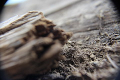 IMG_1639 (David Denny2008) Tags: river tiber rome italy march 2019 wood fallen tree macro