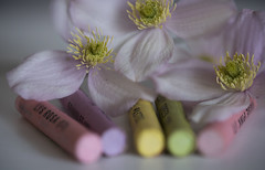 Pastel 4 (PhilDL) Tags: macromondays macro pastel pastels pastelcolours flower clematis clematismontana colour colours color colors colourful subtle subtlety softtones softfocus softness crayons oilpastels focalpoint blur blurring exposure contrast hues highlights shadows shades lightshade light levels dark vibrance foreground background camera dslr photography photo lens nikon nikonuk tamron nikond810 90mm