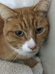 Dean - 3 year old neutered male