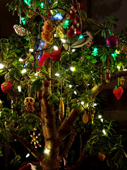 Holy Jade (knightbefore_99) Tags: cool best awesome nice great fantastic jade tree holy xmas festive green vert verde ornaments decor light pretty