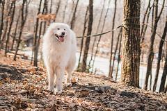 DSC02997 (Parfenova Natasha) Tags: weekend winter nature walking dog