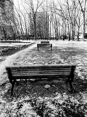 3 Benches in Winter (MassiveKontent) Tags: park benches shadows winter snow trees contrast noiretblanc blackwhite montreal bw city monochrome urban blackandwhite streetphoto montréal quebec streetphotography bwphotography streetshot android lines griffintown tree symmetry