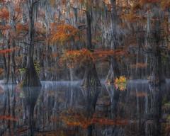 Bayou Mirror (D Breezy - davidthompsonphotography.com) Tags: swamps bayou mist misty cypress baldcypress cypresstrees fallcolors fall autumn reflections longexposure mirror glass