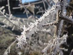 ....mehr Eis.... (elisabeth.mcghee) Tags: branch ast eiskristalle icicles frost frozen oberpfalz