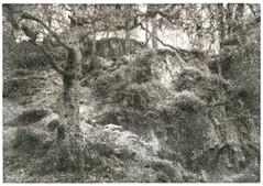 Loughregg Fell, England - 2 (George L Smyth) Tags: altprocess bromoil england loughreggfell