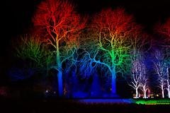 IMG_6691_Colored Park (andie2085) Tags: tree park light colors night dark landscape bäume nacht farbspiel bunt farben canon eos 100d lights winterleuchten winterlightning egapark erfurt deutschland