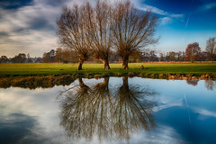 3 Willows (pboolkah) Tags: colchester england unitedkingdom gb canon canon5d canon5dmkiv water trees reflections suffolk