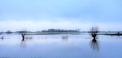 Flooded land (Jenne Barneveld) Tags: flooded floodedland water waterreflections reflection reflections blue bluesky bluewater trees tree cold coldmorning morningwalk morning