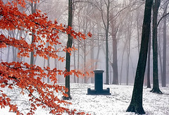 "Cincinnati - Spring Grove Cemetery & Arboretum ""Solitary Marker On A Foggy/Winter Morning"" (David Paul Ohmer) Tags: cincinnati ohio spring grove cemetery arboretum fog winter marker tree trunks black"