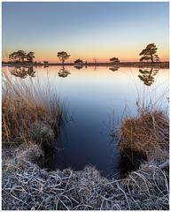 First light at Dwingelderveld (Rob Schop) Tags: dwingelderveld drenthe samyang12mmf20 morning frost rijp sunrise reflection trees cold nationaalpark sonya6000 f11 focusstack