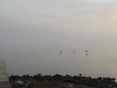 122318am fog and birds (sunlight_hunt) Tags: sunlight sunrisesunset sunriseoverwater matagordabay texasgulfcoast texas texassunrisesunset texassky palacios