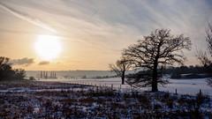 winterscape_2019 (Joerg Esper) Tags: landscape landschaft thür thürer wiesen winter snow schnee natur nature tree trees baum bäume sonne sun sunlight olympus olympusomdem1 olympus124028 olympusmzuikodigitaled12‑40mm128pro mayenkoblenz rheinlandpfalz deutschland germany de