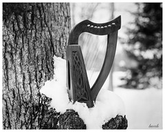 Meditative (Larry Buechler) Tags: papernegative crowngraphic analog caffenol largeformat ilford kodak ektar winter woods woodland 4x5