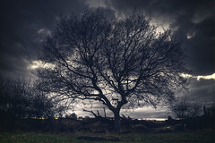 The Naked Tree [Explore] (nigdawphotography) Tags: tree trunk branches sunset embers parndonwood harlow essex