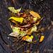 Dead Leaves in a Dead Tree