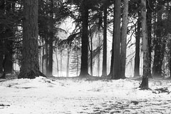Over and over (Anxious Silence) Tags: hampshire newforest uk winter forest snow weather tree nature landscape blackandwhite